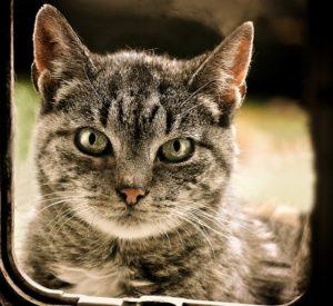 La puce est utilisée pour les chatières électroniques