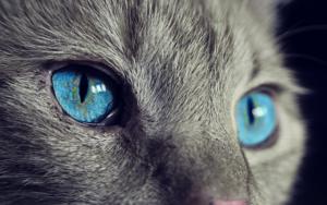 avis chatière à puce électronique