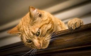 Où installer une chatière