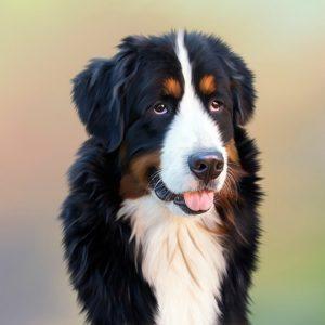 Différentes tailles de chatières pour chien existent