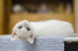 Utilisation de la chatière par le chat