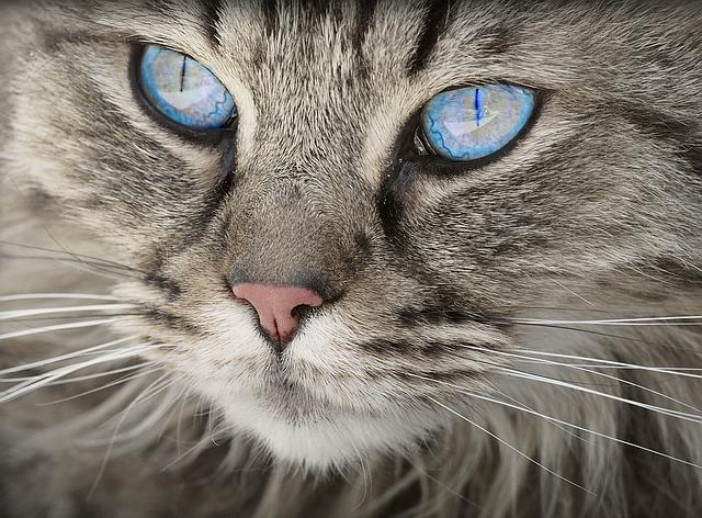 La chatière électronique n'est pas un gadget