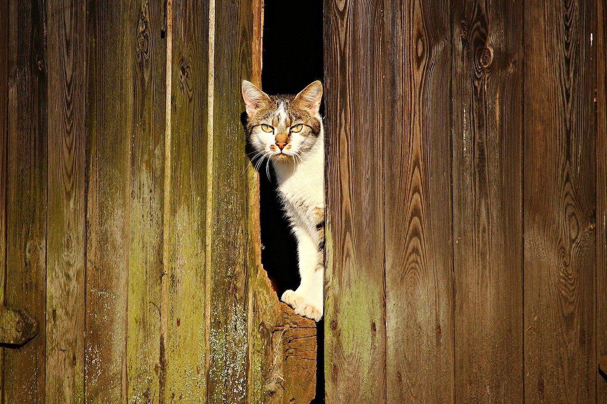 Chatière sécurisée