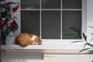 Un chat devant une fenêtre