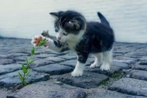Un chaton à l'extérieur