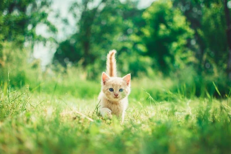 Chat qui explore le jardin